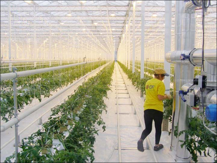 Greenhouse inside