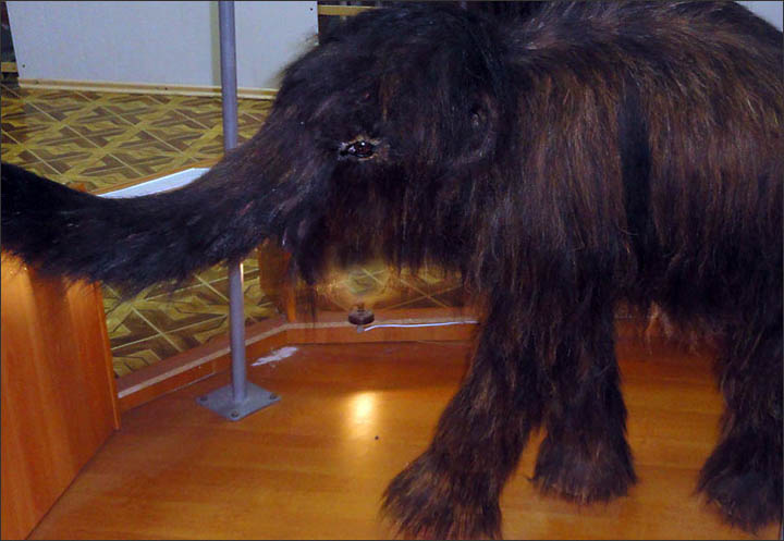 mammoths, Yakutia, baby mammoth, mammoths revival