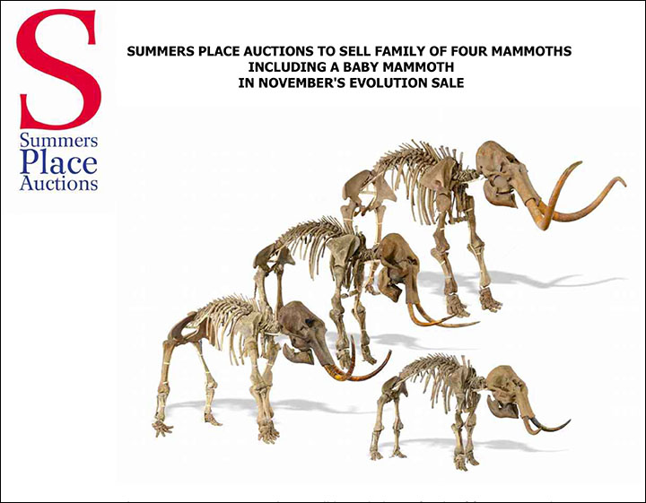Mammoth family on sale