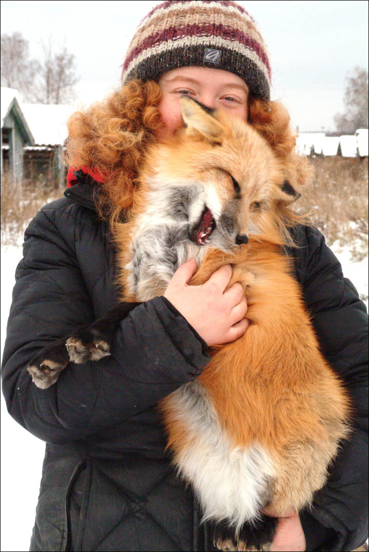 tamed foxes, Siberia